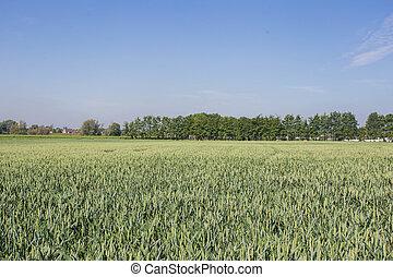 landwirtschaftlich, landschaftsbild, mit, grün, felder, auf, hügel, und, sonne, weinlese, bild