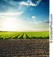 landwirtschaftlich, schwarz, grün, felder, und, sonnenuntergang wolken