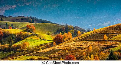 landwirtschaftliche felder, auf, hügel, an, sonnenaufgang