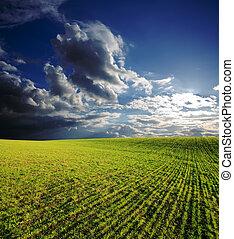 landwirtschaftliches feld, mit, grünes gras, unter, tief, blauer himmel, mit, wolkenhimmel, in, sonnenuntergang