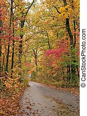 Lane in fall