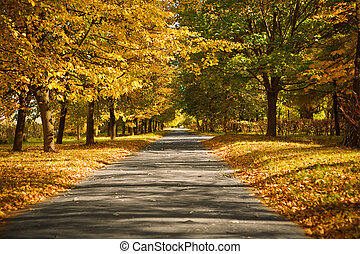 lane in the autumn park