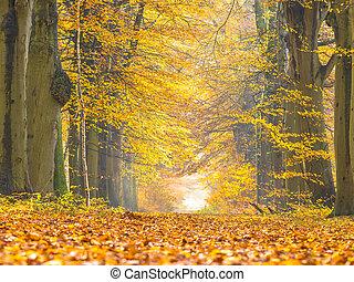 Lane with Yellow Foliage of Birch Trees during Autumn