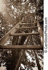 Lange garden stairs at cherry as old photo - Lange garden...