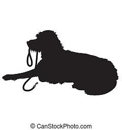 langhårede, hund, silhuet