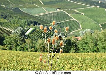 Langhe vineyards panorama, Piedmont, Italy.