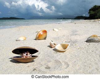 langkawi, マレーシア, 浜, 島, 貝殻