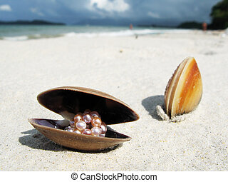 langkawi, 島, 殻, マレーシア, 海, 浜, 砂