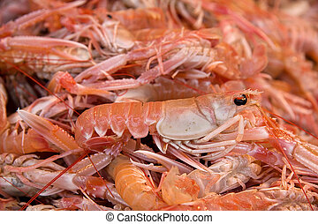 Fresh langoustines for sale at a French fish market
