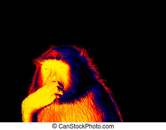 langur in scientific high-tech thermal imager