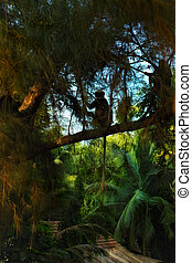 Langurs monkeys