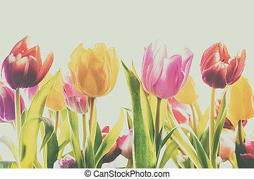 langzaam verdwenen, ouderwetse , achtergrond, van, fris, lente, tulpen