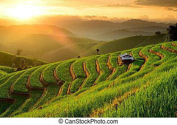 lannscape, papongpieng, chiangmai, terrazas, ocaso, prohibición, tailandia, arroz, fondo