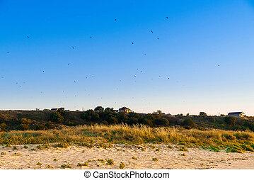 lanscape, céu, litoral, colina, rural, pássaros