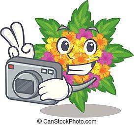lantana , φωτογράφος , σχήμα , λουλούδια , γελοιογραφία