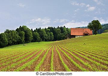 lantbruk, fält