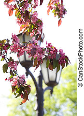 Lantern and cherry-tree in the park