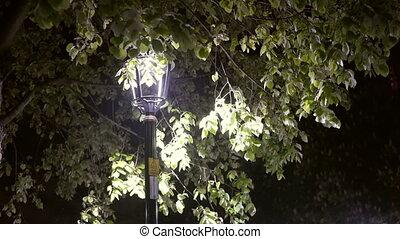 Lantern night storm park in the city