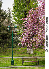 lantern, wooden bench and cherry blossom in citypark....