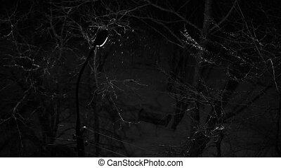 lanterne, neige, fond, chutes