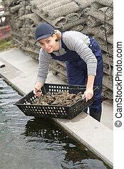 lantgård arbetare, kvinnlig, ostron