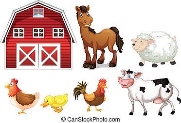lantgård, djuren
