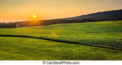 lantgård, fält,  över,  Pennsylvania, solnedgång,  York, grevskap, lantlig