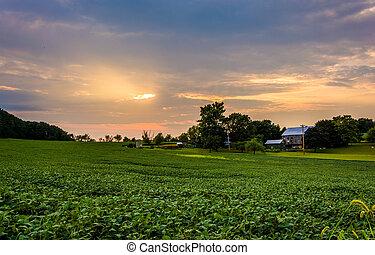 lantgård, fält,  över,  sky,  Pennsylvania, solnedgång,  York, grevskap, lantlig