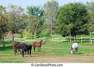 lantgård, hästar