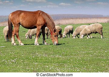 lantgård kreatur, häst, och, sheep