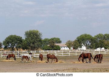 lantgård, med, hästar