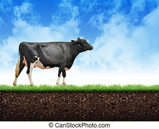 lantgård, smutsa, vandrande, gräs, ko