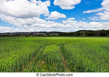 lantlig, grönt landskap