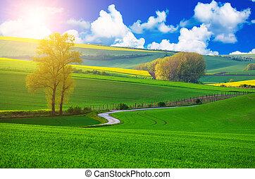 lantlig, landskap, väg