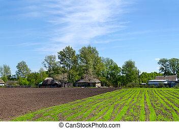 lantligt landskap, med, fjäder, skjuter, på, blomsterbädd