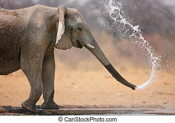 lanzamiento, agua, elefante