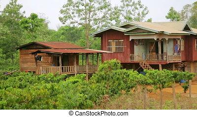 Lao village life around coffee planted Bolaven Plateau,...
