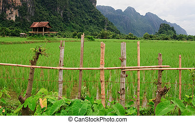 Bright green rice paddy field with farmers hut behind fence, mountainous Laos in the background, South East Asia