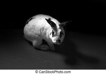 lapin, abus animal, noir blanc, concept