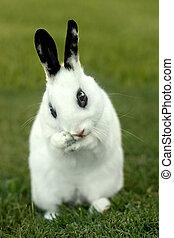 lapin, herbe, lapin, dehors, blanc
