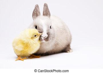 lapin pâques, fond, blanc