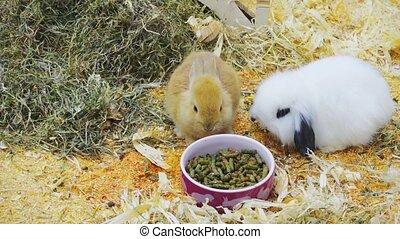 lapins, petit, t, amusez-vous, manger