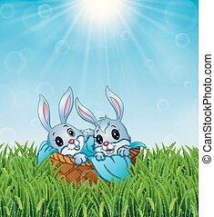 lapins, serviette, bébé, fond, panier, herbe