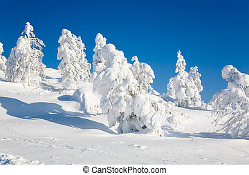 Beautiful winter landscape with snowy trees in Lapland