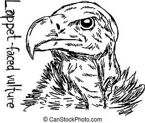 lappet-faced vulture's head - vector illustration sketch hand drawn with black lines, isolated on white background