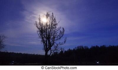 lapse., moon., лиственница, 4k, время, comes