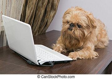 laptop , σκύλοs