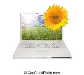 laptop-computer, freigestellt, sonnenblume, silber