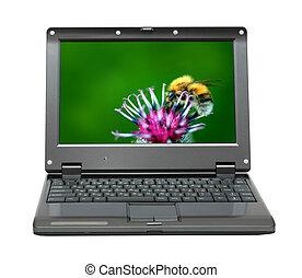 laptop, fiore, bumble-bee, cardo