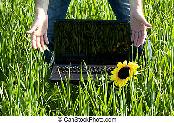 laptop in green grass with a sunflower and the hand of man